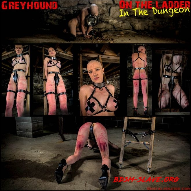 Greyhound – On The Ladder In The Dungeon (Brutal Master) [FullHD/2019]