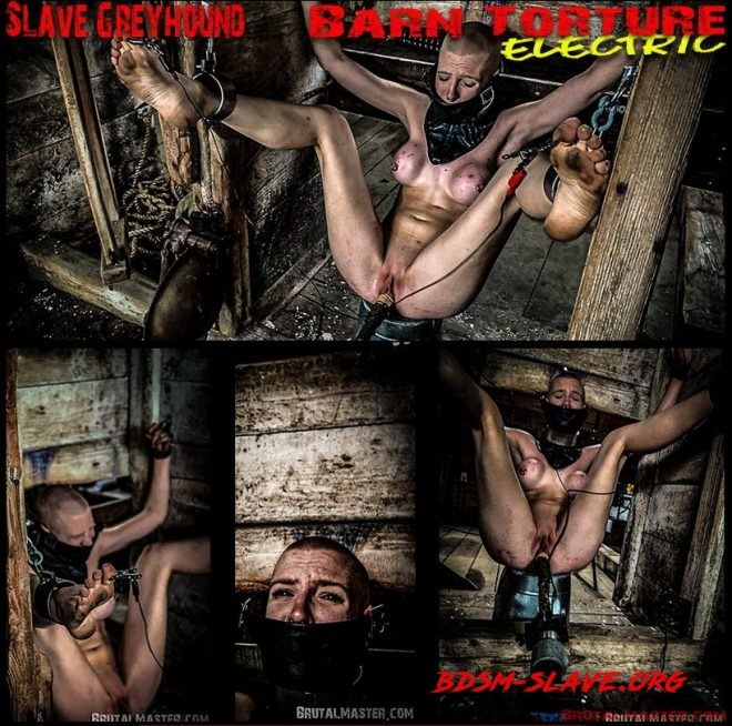 Slave Greyhound Barn Torture Electric (BrutalMaster) [FullHD/2020]