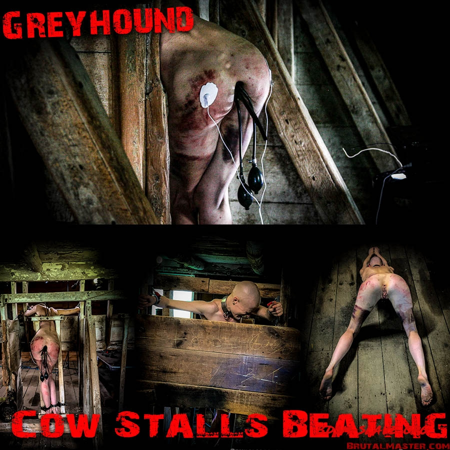 Greyhound (BrutalMaster) [FullHD/2020]